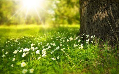 Frühlingsputz fürs Hirn: Mentales Aufräumen in 3 Schritten